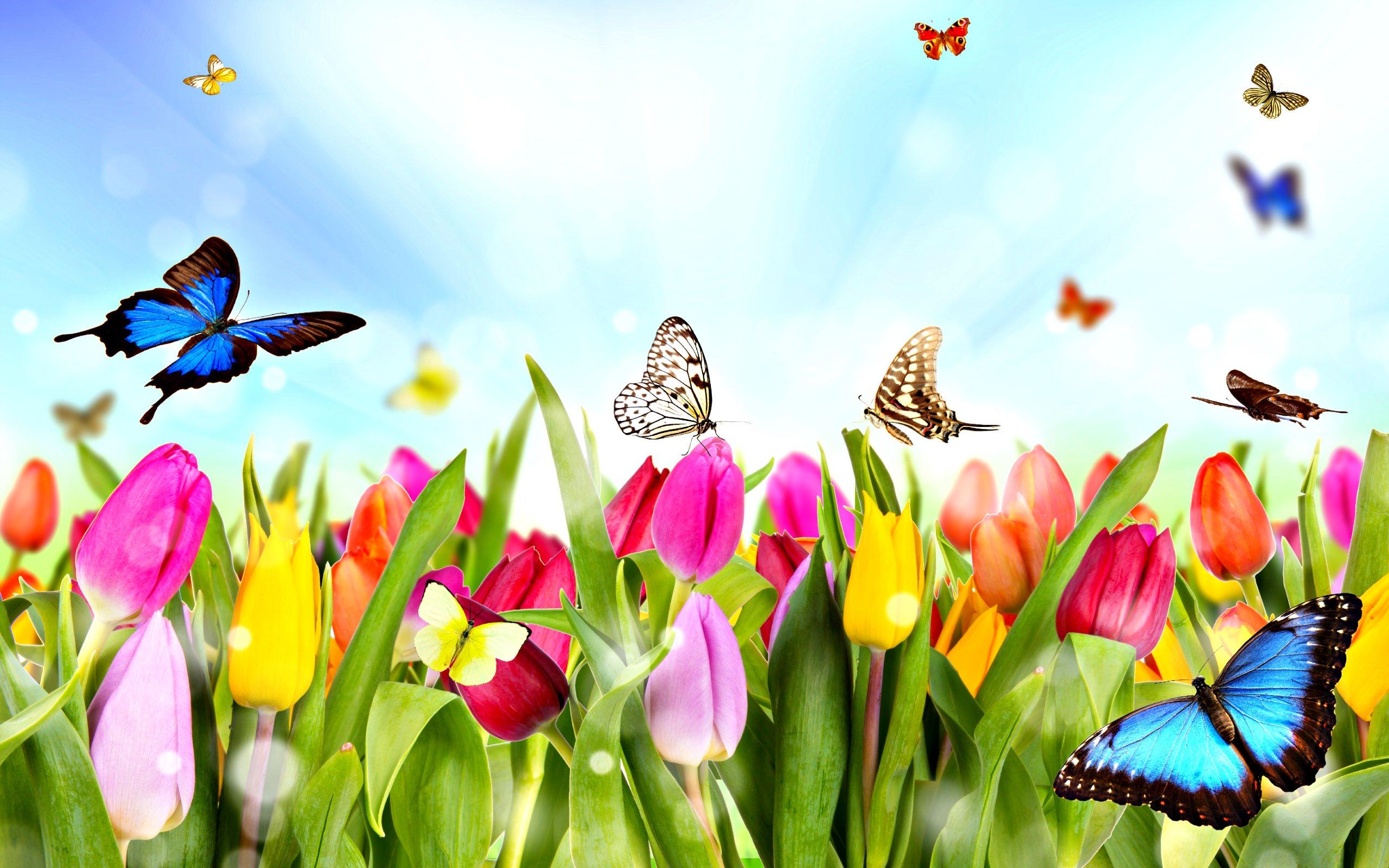 dream-spring-2012-spring-time_2560x1600_96689